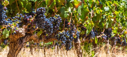 Wine-Tours-Vineyards-Red-Wine